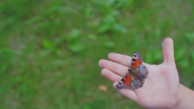 butterfly on the palm of a child - io księżyc filmów i materiałów b-roll