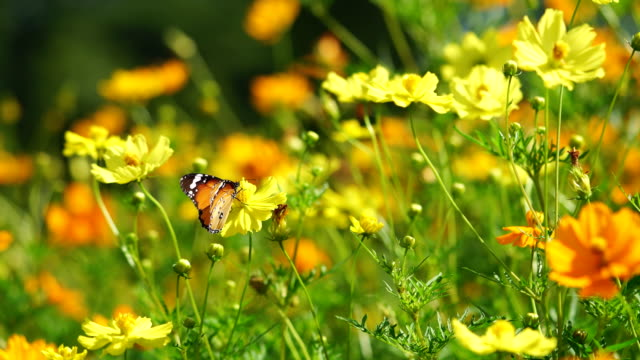 butterfly on yellow flower - flowers стоковые видео и кадры b-roll