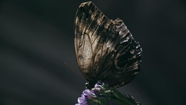 Butterfly Opening Wings
