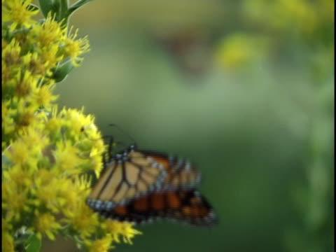 butterfly rack focus - 10 saniyeden daha kısa stok videoları ve detay görüntü çekimi