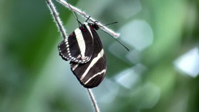 vídeos y material grabado en eventos de stock de mariposa descansar en una rama (alta definición - parte del cuerpo animal