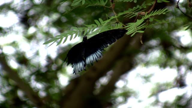 vídeos y material grabado en eventos de stock de mariposa descansar en una hoja (alta definición - parte del cuerpo animal
