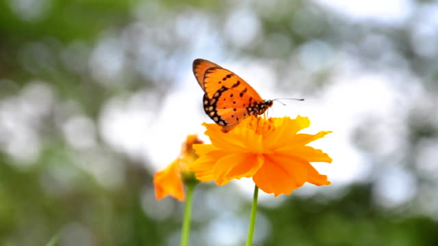 butterfly resting on the yellow flower