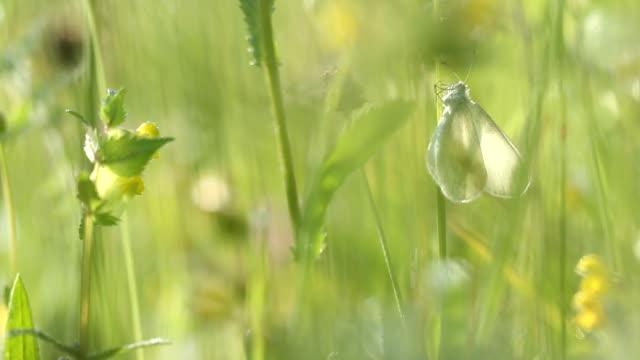 butterfly placering på gräs med blåser vinden - djurlem bildbanksvideor och videomaterial från bakom kulisserna