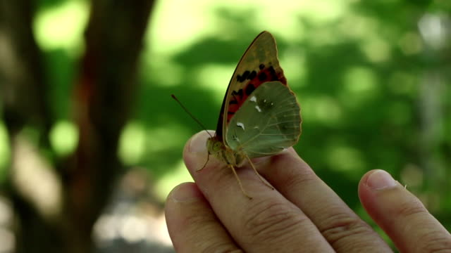 Butterfly Sitting on Finger video