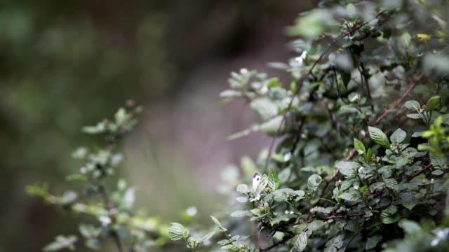schmetterling auf grüne blatt sitzen - himachal pradesh stock-videos und b-roll-filmmaterial