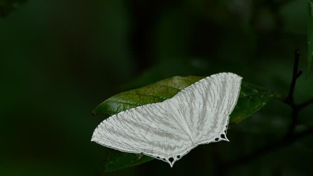 stockvideo's en b-roll-footage met butterfly - arthropod