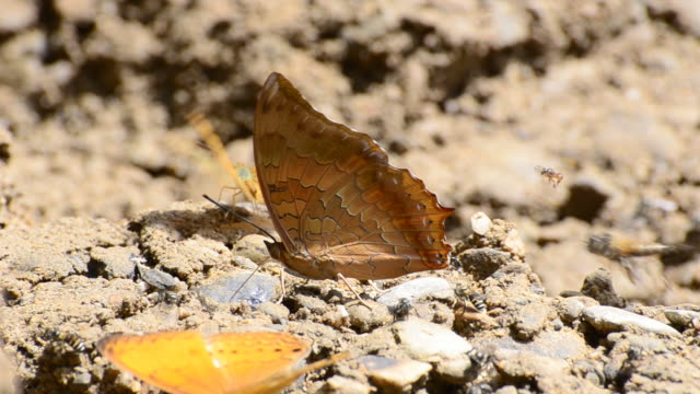 Butterfly Orange Butterfly. animal limb stock videos & royalty-free footage