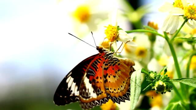 butterfly video