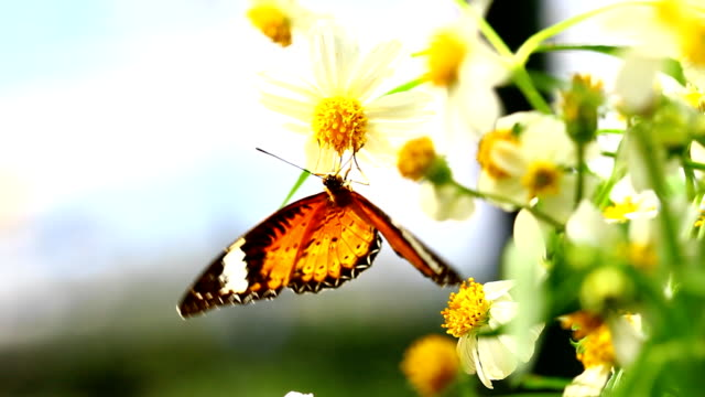 butterfly - spring stock videos & royalty-free footage