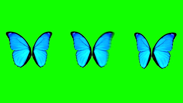 butterfly wings moving in different speed on a green screen background - butterfly stock videos and b-roll footage