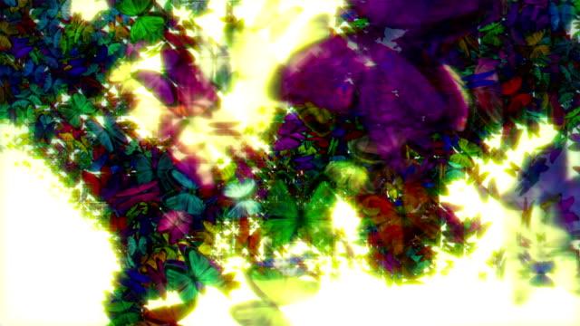 Butterfly world video