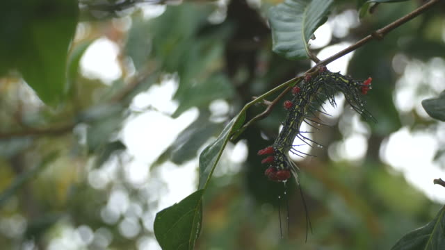 butterfly worm resting on the tree branch video