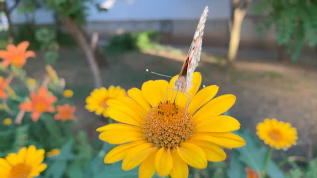 butterfly-insect video