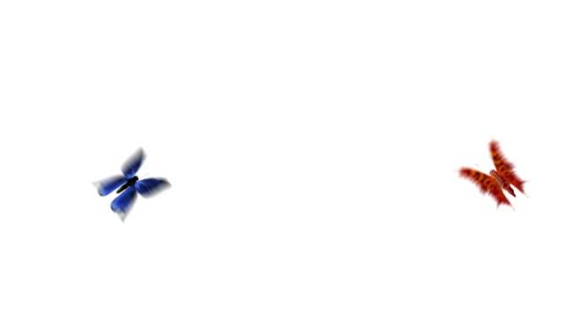 Butterflys flight with alpha channel video