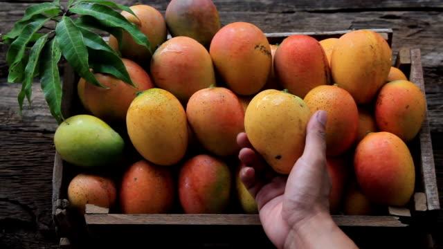 Buying mango at fresh market Buying mango fruit at fresh market mango stock videos & royalty-free footage