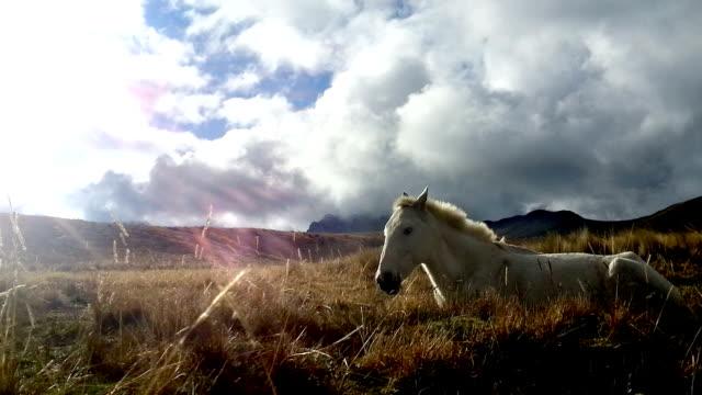 caballo blanco descansando en el pichincha ecuador 1 - vídeo