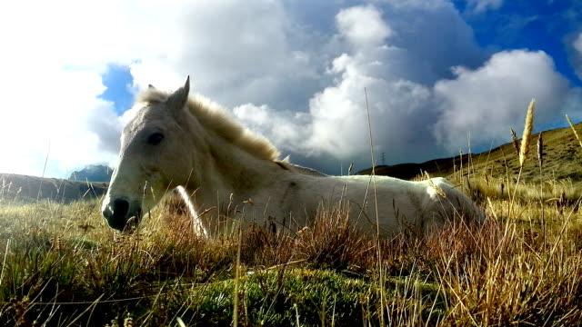 caballo blanco descansando en el pichincha ecuador 3 - vídeo