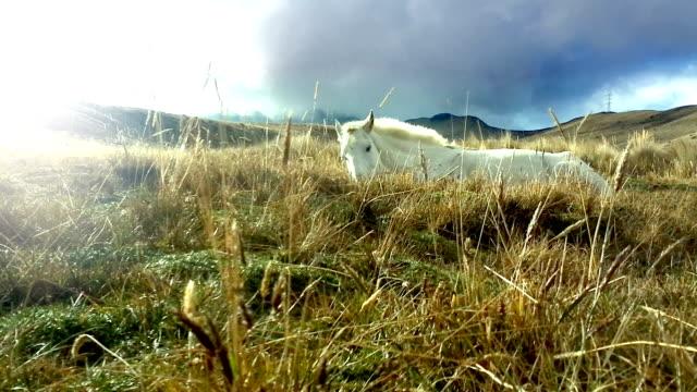 caballo blanco descansando en el pichincha ecuador 6 - vídeo
