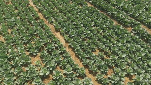 kohlkopffeld im sommer überführung - aerial view soil germany stock-videos und b-roll-filmmaterial