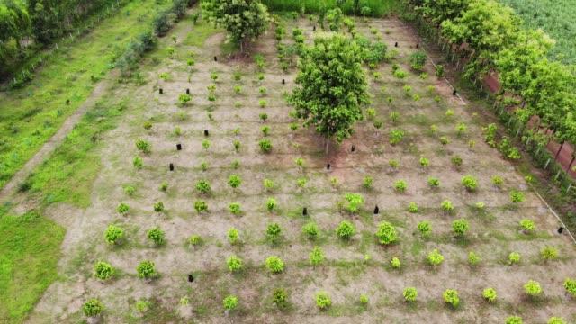 vidéos et rushes de ferme de cacao de la vue aérienne. - plantation