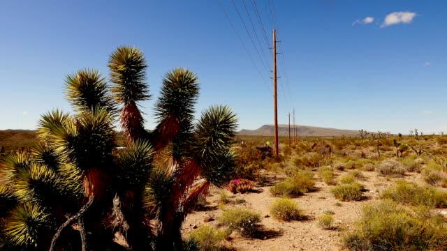 joshua alberi di cactus e la rigogliosa vegetazione del deserto media in nevada - red rock canyon national conservation area video stock e b–roll