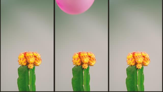 サボテン コントラ バルーン - 尖っている点の映像素材/bロール