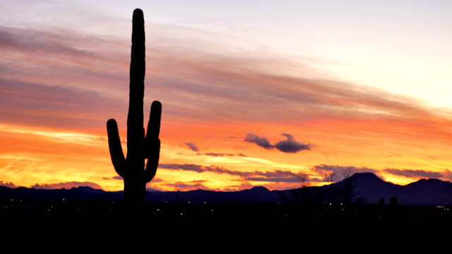 Cactus desert, Tucson, Arizona