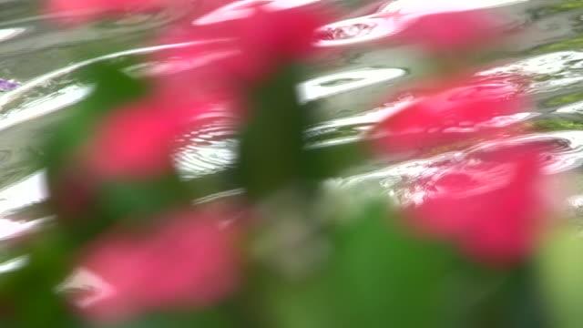 stockvideo's en b-roll-footage met cactus flowers - infaden