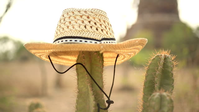 Cactus in the desert wearing a straw hat video