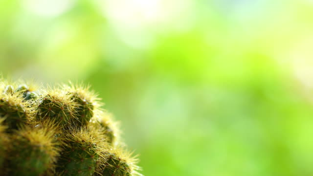 Cactus , panning shot