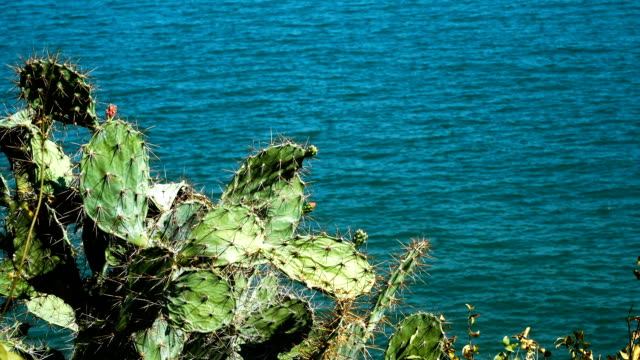 vídeos de stock e filmes b-roll de cactus tree at sea background - ambiente vegetal