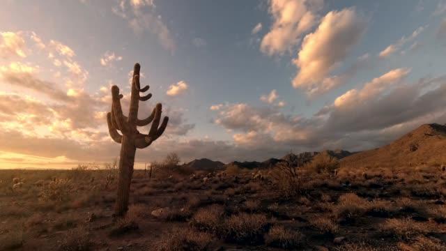 vídeos de stock, filmes e b-roll de filmagens de lapso de tempo no deserto de árvore de cacto durante o pôr do sol - deserto