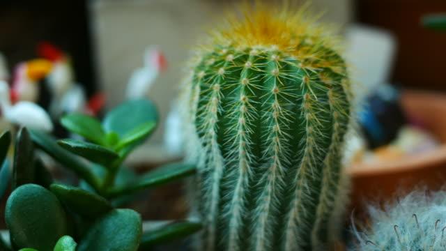Cactus video