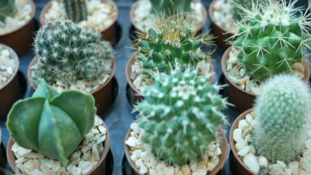 Cactus Cactus potted plant stock videos & royalty-free footage