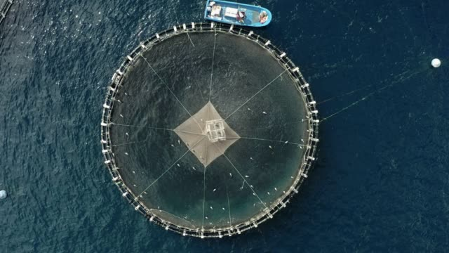 cage culture is an aquaculture production system where fish are held in floating net pens - fishing video stock e b–roll