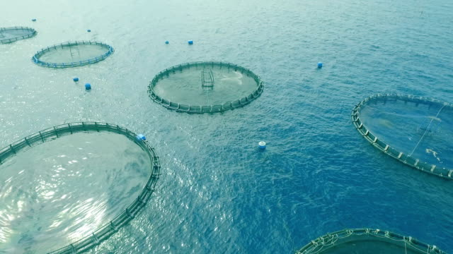 vídeos de stock e filmes b-roll de cage fish farming in the ocean - aquacultura
