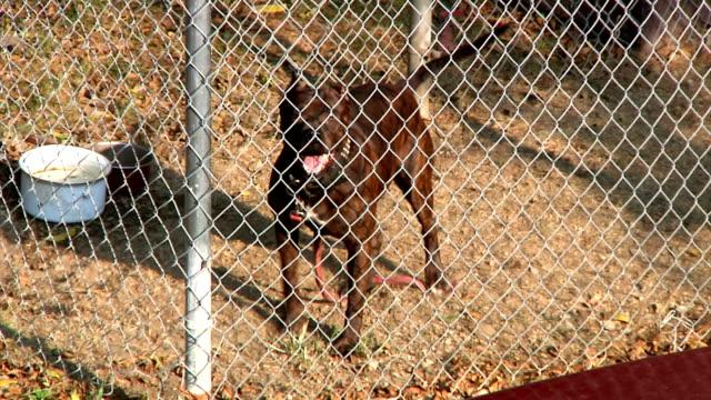 Caged Dog Barking video