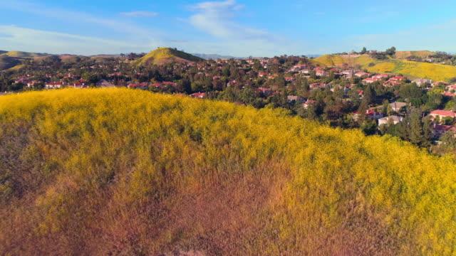vidéos et rushes de calabasas city derrière les collines couvertes de fleurs dans les montagnes de santa monica, comté de los angeles, californie, etats-unis. vidéo aérienne avec vol à basse altitude et mouvement de la caméra avant. - californie du sud