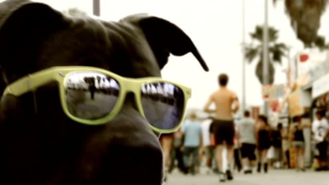 california beach hund - skateboardfahren stock-videos und b-roll-filmmaterial