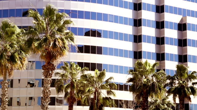 California Business office tower dwarfing palm trees swaying in the wind California Business office tower dwarfing palm trees swaying in the wind. office park stock videos & royalty-free footage
