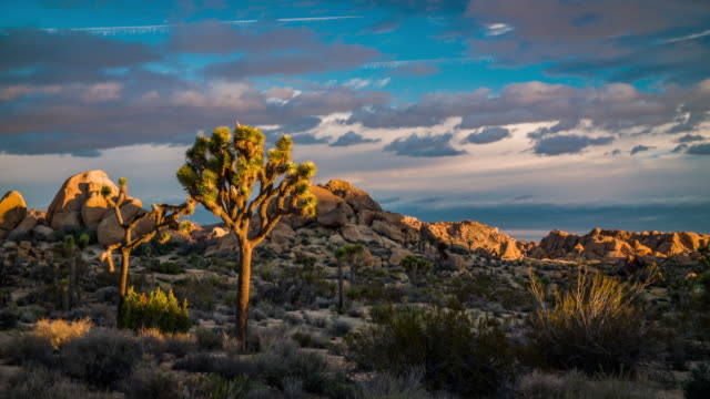 USA, California, Joshua Tree National Park video