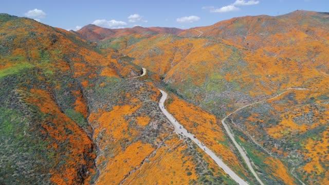 kalifornien poppy fält - vild blomma bildbanksvideor och videomaterial från bakom kulisserna