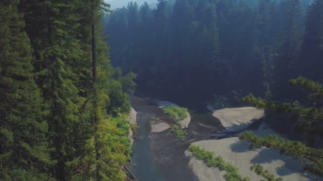 california redwoods und river 02 - filmmusik stock-videos und b-roll-filmmaterial