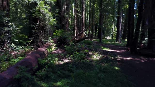 California Redwoods Park Aerial