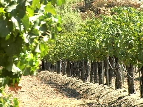 калифорния виноградник (ntsc - длина стоковые видео и кадры b-roll