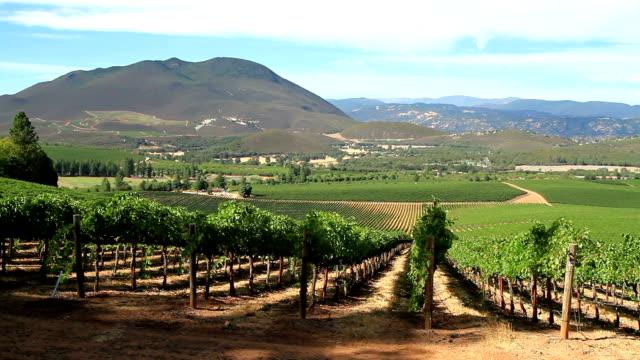 California Vineyard video