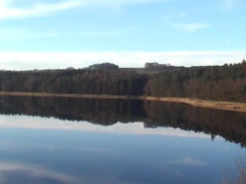 lago calmo e boschi, che riflette il cielo azzurro, nuvole bianche, - pinacee video stock e b–roll