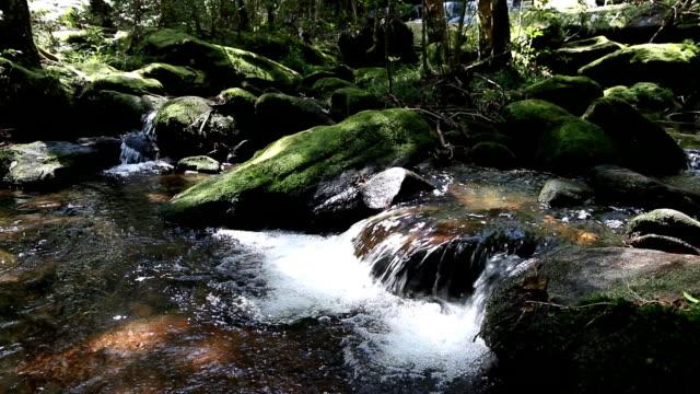 vidéos et rushes de calmer les cours d'eau de montagne qui coule dans la forêt verte - mise au point sélective. - eau vive