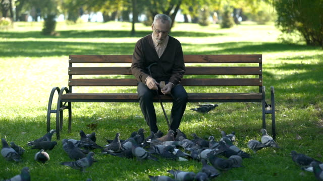 Calm old man sitting on bench in park and feeding pigeons, loneliness in old age